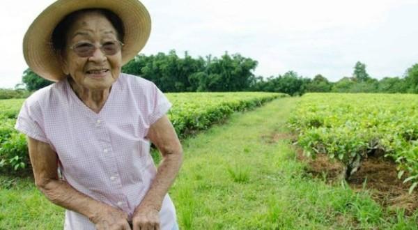 Aos 90, imigrante faz renascer o cultivo de chá no interior de SP