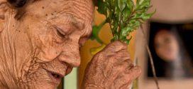 Sabedoria ancestral das benzedeiras mostra poder das ervas
